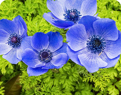 floriculture app